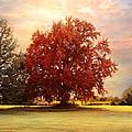 The Healing Tree  by Jai Johnson
