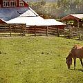 The Horse In The Barn Yard by Kathy Jennings