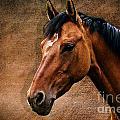 The horse portrait