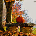 The Last Pumpkin Print by Lois Bryan