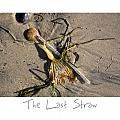 The Last Straw Print by Peter Tellone