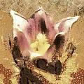 The Light Flower by Odon Czintos