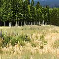 The Meadow Digital Art by Phyllis Denton