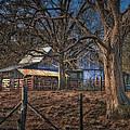 The Old Barn by Brenda Bryant
