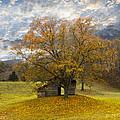 The Old Oak Tree by Debra and Dave Vanderlaan