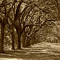 The Old South Series In Sepia by Suzanne Gaff