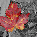 The Red Leaf by Paul Ward