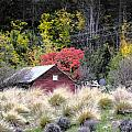 The Red Shed by Karen Lewis