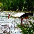 The Stork by Stefan Kuhn