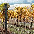 The Vineyard by Margaret Hood