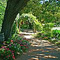 The Vineyard Walk by Sotiri Catemis