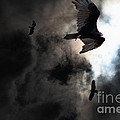 The Vultures Have Gathered In My Dreams . Version 2 Print by Wingsdomain Art and Photography