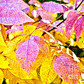 The Warm Glow In Autumn Abstract by Andee Design