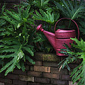 The Watering Can by Brenda Bryant
