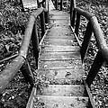 The Way Down by Olivier Steiner