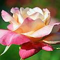 Thorns Have Roses by Melanie Moraga