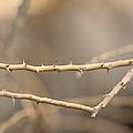 Thorny Desert Plant Inside The Desert by Joel Sartore
