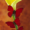 Three Red Butterflies On Calla Lily by Garry Gay