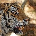 Tiger De by Ernie Echols