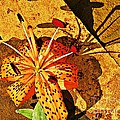 Tiger Lily Still Life  by Chris Berry