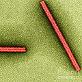 Tobacco Mosaic Virus, Tem by Omikron