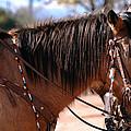 Tombstone Horse