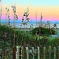 Topsail Island Dunes and Sand Fence Print by Julie Dant