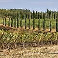 Toscana by Joana Kruse