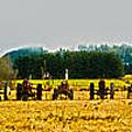 Tractors Ready by Dale Stillman