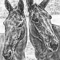 Trail Mates - Mule Portrait Art Print by Kelli Swan