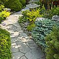 Tranquil Garden  by Elena Elisseeva