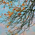 Tree Branches In Autumn by Gabriela Insuratelu
