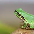 Tree Frog by Copyright Crezalyn Nerona Uratsuji