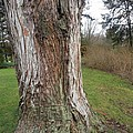 Tree God