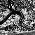 Tree Of Life - Bw by Kenneth Mucke