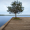 Tree On Jetty by Billy Currie Photography