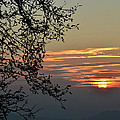 Tree Silhouette At Sunset by Bruno Santoro