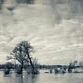 Trees In River Rhine by Dirk Wüstenhagen Imagery