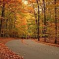 Trees Of Autumn - Holmdel Park by Angie Tirado