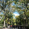 Trees On The Mall In Central Park by Rob Hans