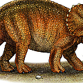 Triceratops by Roger Hall and Photo Researchers