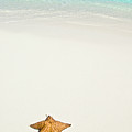 Tropical Beach And Starfish by Mehmed Zelkovic