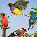 Tropical Birds Print by RB Davis