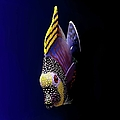 Tropical Fish by Pieceoflace Photography