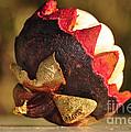Tropical Mangosteen - The Medicinal Fruit by Kaye Menner