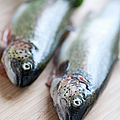 Trouts by Carlo A