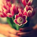 Tulips In Woman Hands by Photo by Ira Heuvelman-Dobrolyubova