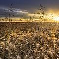 Tumble Wheat by Debra and Dave Vanderlaan