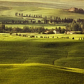 Tuscan Fields by Andrew Soundarajan