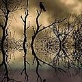 Twilight by Sharon Lisa Clarke